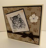 Kortti kissa ja tassutausta