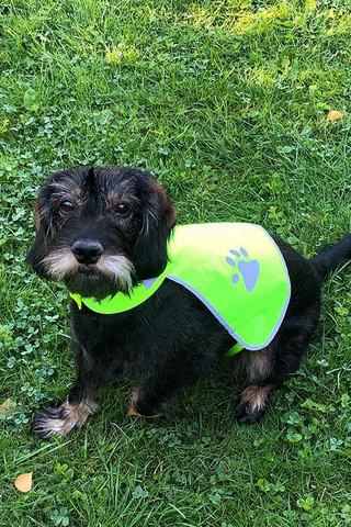 Pienen koiran heijastinliivi
