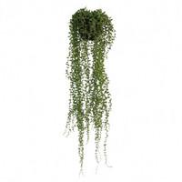 Silkkikasvi - Hernevillakko ruukussa