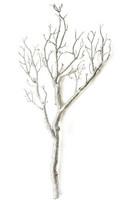 Koristeoksa, Hopea - 75 cm