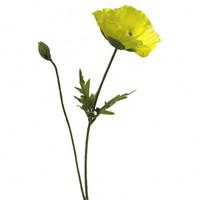 Silkkikukka - Unikko, keltainen