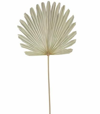 Seinäkoriste - Palmunlehti , 103 cm