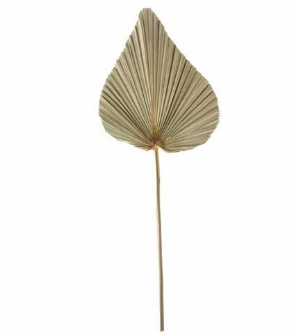 Seinäkoriste - Palmunlehti (2), 50 cm