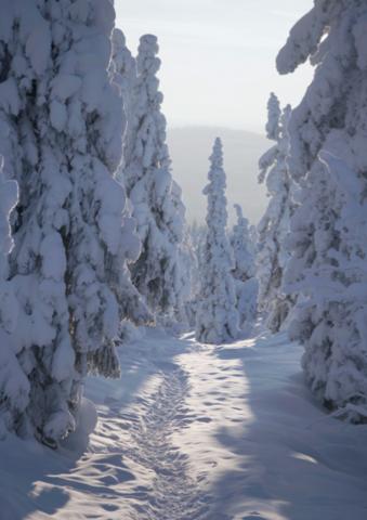 Metsäväen polku - joulukortti