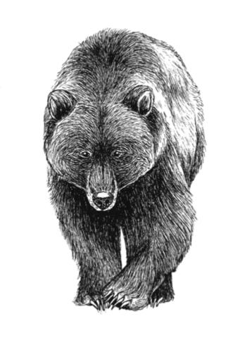 Pohjolan eläimet: Karhu