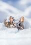 Metsähiiri -joulukortti