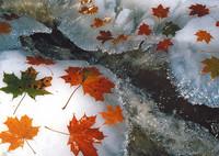 Vaahteranlehdet jääpurolla -postikortti