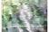Suomen käärmeet ja liskot