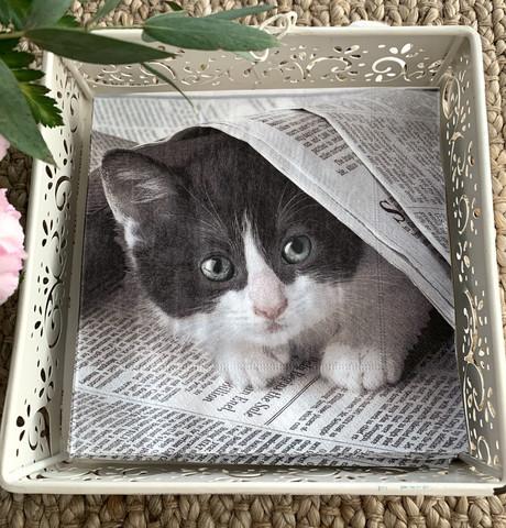 Servetit,  kissa