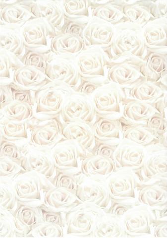 Desing kartonki Ruusut valkoinen