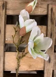 Magnolia oksa valkoinen