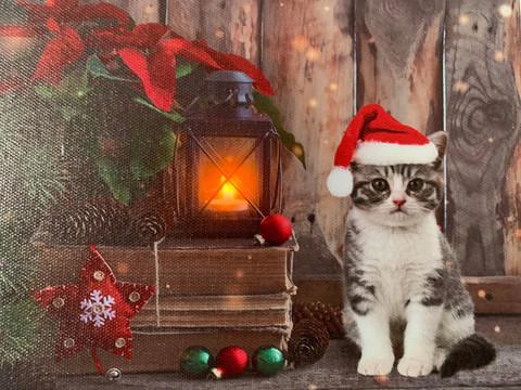 Pikku led-taulu kissa