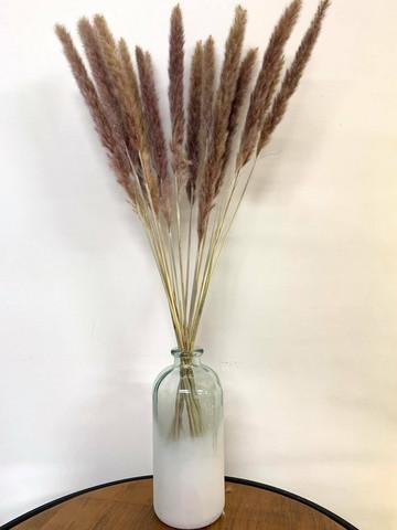 Pampaheinä (15kpl), natural, 70-80cm