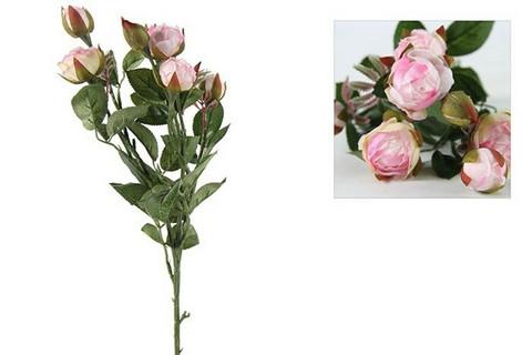 Ruusukimppu, Shakira, pinkki