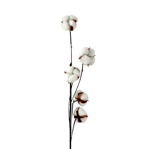 Puuvillaoksa, 79cm