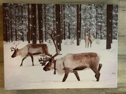 Led-taulu 30x40cm porot metsässä (ajastin)