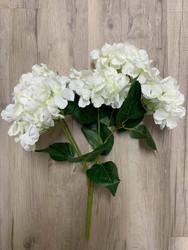 Hortensiakimppu, valkoinen.