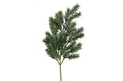 Havuoksa, Pinus