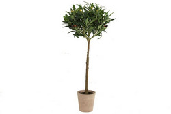Oliivipuu, vihreä