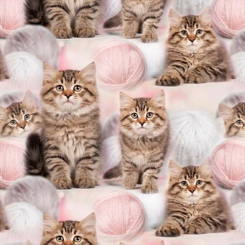Kissanpennut ja lankakerä trikoo