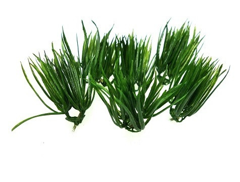 Vanilla grass, 6 pcs