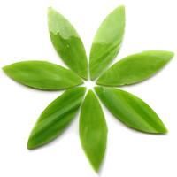 Large petals, Green Tea, 7 pcs
