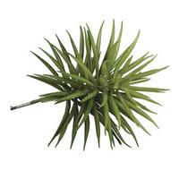 Succulent Senecio, 10 x 9,5 cm