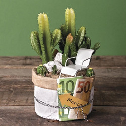 Set of prickly cactuses, 3pcs