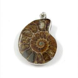 Riipus, Ammonite (ammoniitti, fossiili)