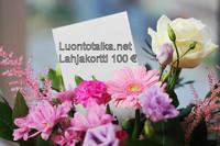 Lahjakortti 100 euroa Luontotaika.net