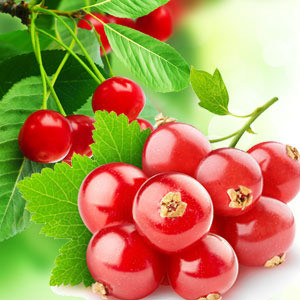 NG Red Currant 10 ml