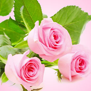 Ruusukimppu (NG Fresh Cut Roses)