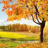 Autumn Woods -tuoksuöljy (Nature's Garden)