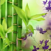 Bambu (NG Australian Bamboo Grass)