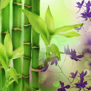 Bambu-tuoksuöljy (Nature's Garden Australian Bamboo Grass)