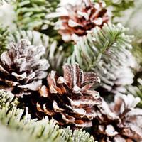 Frosted Pinecones -tuoksuöljy (Nature's Garden)