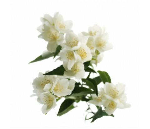 Jasmiini-tuoksuöljy