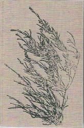 Lehtonen, Joel: Valitut teokset. 1, Putkinotkon herra : kirjeet Sylvia Avellanille 1907-1920