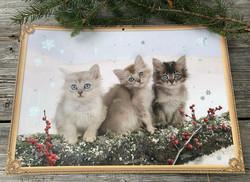 Suloinen joulukalenteri, kuvakalenteri: Kissanpennut lumessa