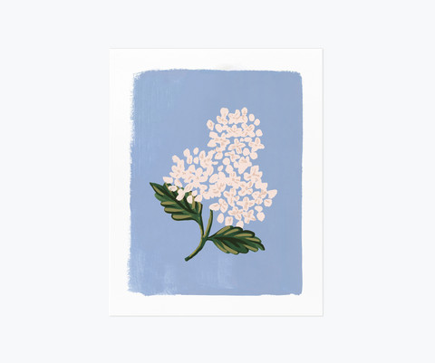 Hydrangea bloom blue-taidejuliste A3