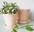 Ruukut ja puutarhavälineet