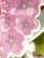 Lumous-heijastin roosa