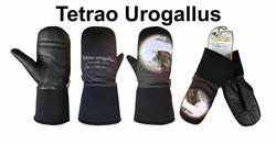 TETRAO UROGALLUS-CAPERCAILLIE-METSO KINNAS