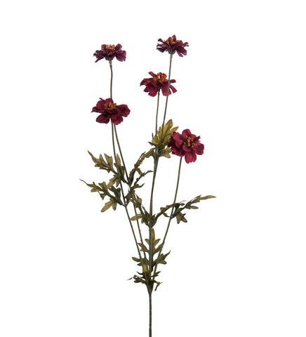 Corepsis red