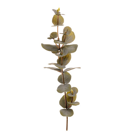 Eucalyptus small