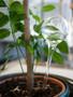 Muurla Watering bulb 33cm