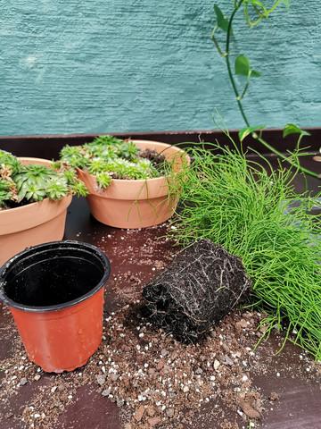 Workshop Plant Basics: Planting and repotting