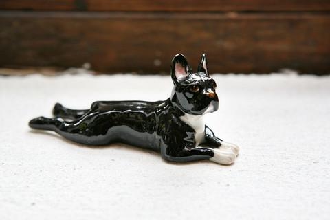 Ranskanbulldoggi miniatyyrikoira