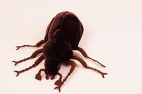 Musta koppakuoriainen