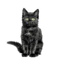 Musta kissa ruokaservetti